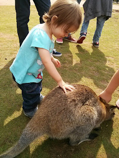 stroke a wallaby
