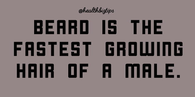 Beard is the fastest growing hair of a male.