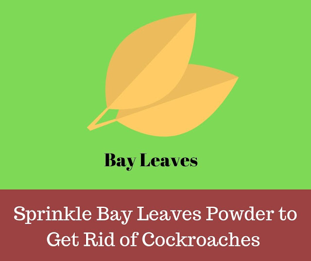 Get rid of roaches overnight with Bay Leaves Powder