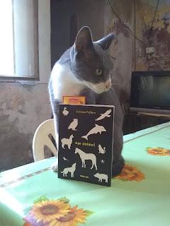 Mi gato Bruno y el libro