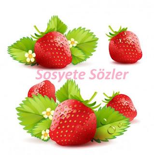 Sebze Ve Meyveleri Tanıyalım ile ilgili aramalar meyve ve sebzeleri öğreniyorum  sebzeleri tanıyalım  meyveleri tanıyalım oyunu  meyveleri öğreniyorum etkinlik  sebze adları  meyveleri öğreniyorum kitap  meyve isimleri  meyve tanıtımı