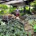 Do folia fertilisers work?