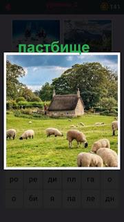 на пастбище пасутся овцы и вдали виден дом