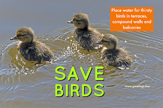SAVE BIRDS THIS SUMMER KEEP WATER IMAGES
