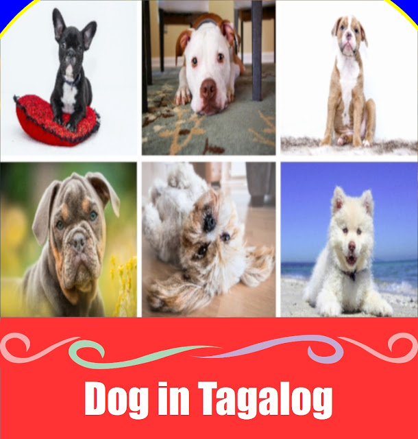 Dog in Tagalog