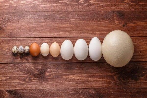 Những Thực phẩm giúp tăng cân tại nhà hiệu quả