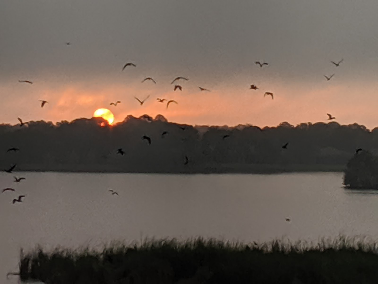 Birds Over Lake Uiehleni