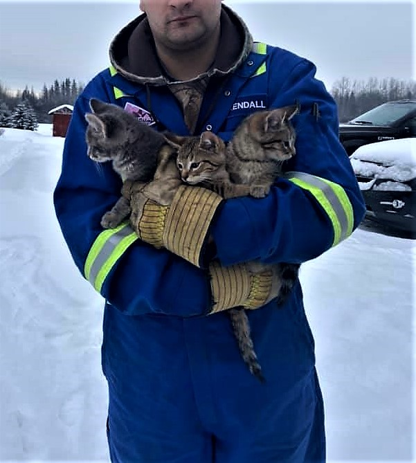 A Canadian hero saved three frozen kittens.