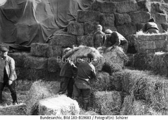 Soviet prisoners of war stacking bales of hay, May 1942 worldwartwo.filminspector.com