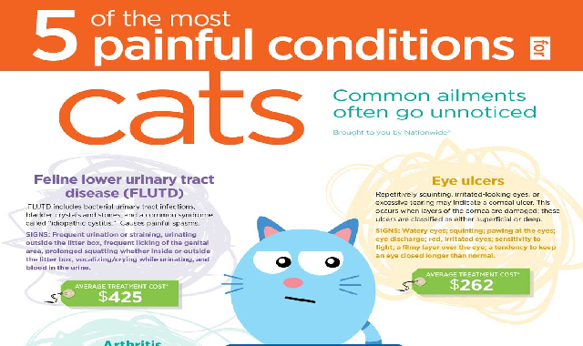 5 Painful Conditions for Cats #infographic