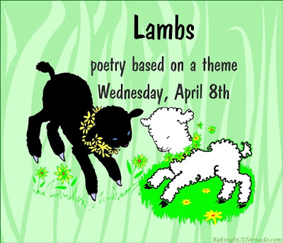 Lambs, a monthly poetry challenge based on a theme. | Graphic property of www.BakingInATornado.com | #poetry
