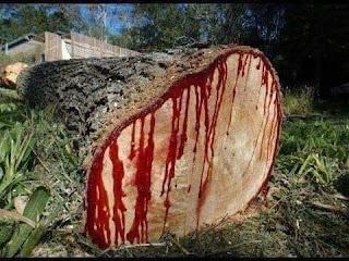 شجرة دم الأخوين: مكان مقتل هابيل ابن آدم عليه السلام؟
