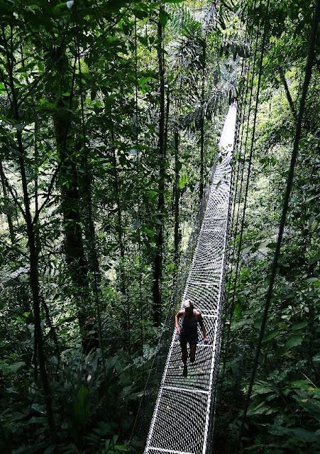 Hay excelentes condiciones para unas vacaciones relajantes: un bar rodeado de vegetación tropical, un restaurante, una bañera de hidromasaje cubierta, masajes y terapia de lodo. En la selva tropical, en la frontera del ParqueNacional Arenal.