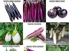 Khasiat Sayur Terung