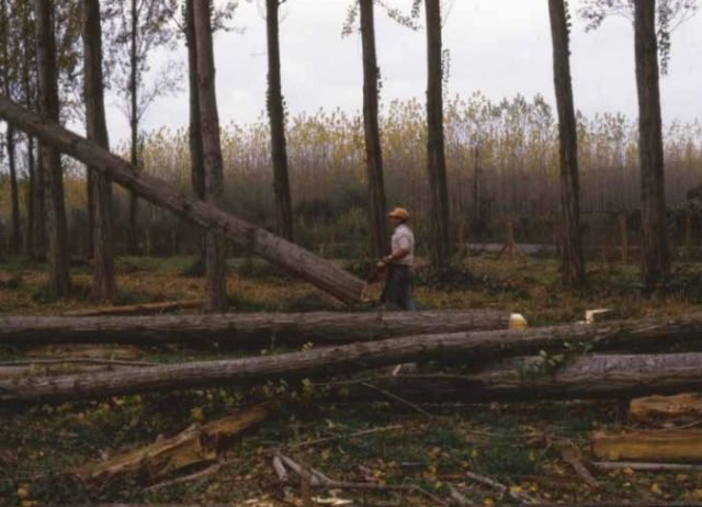 Productores forestales