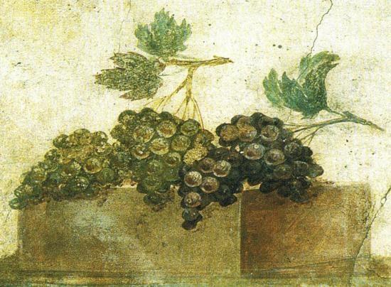 un dipinto raffigurante l'uva nera tipica del vino primitivo