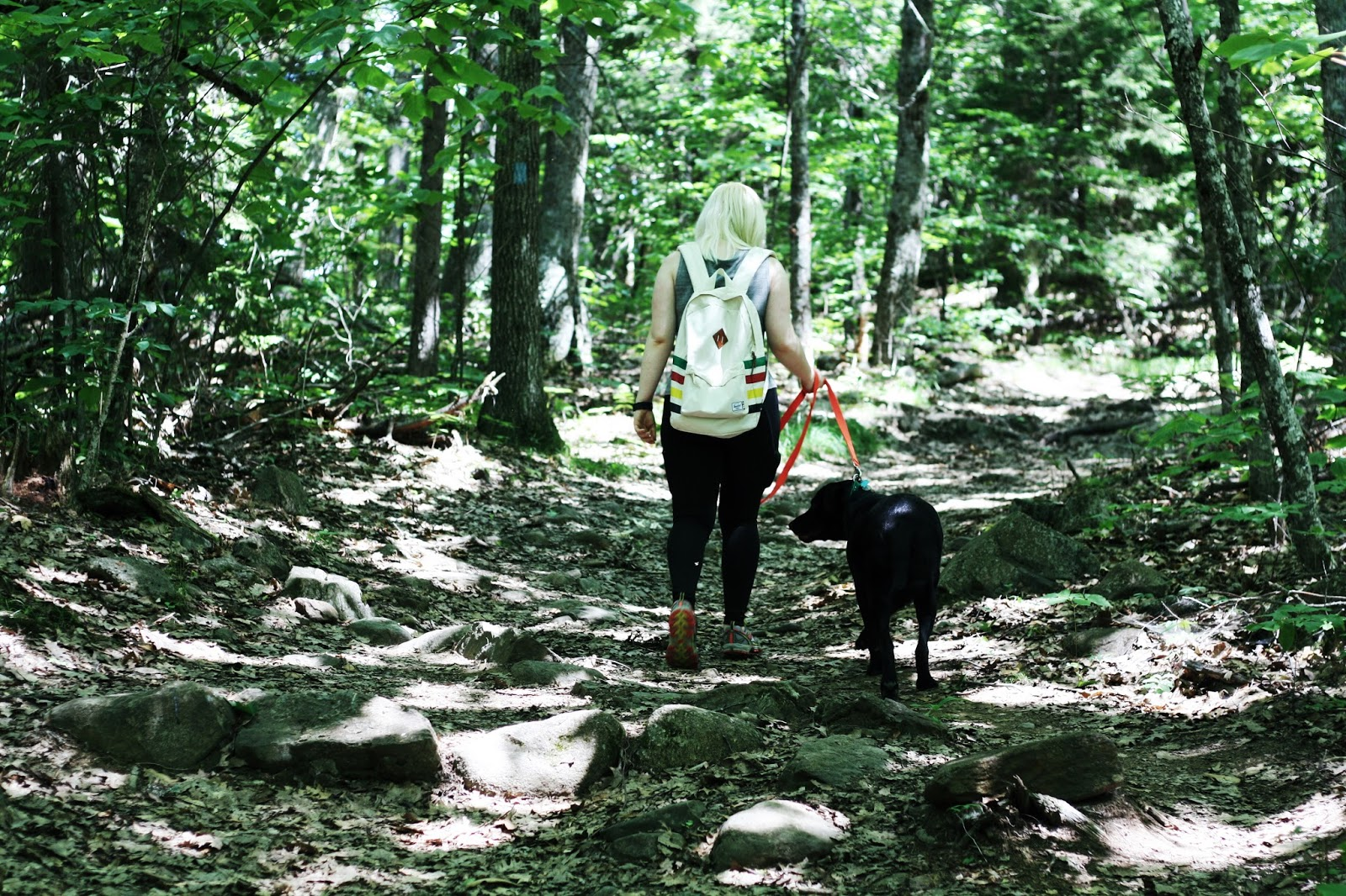 Bald Rock Mountain Trail, things to do near Camden Maine, dog friendly camden maine