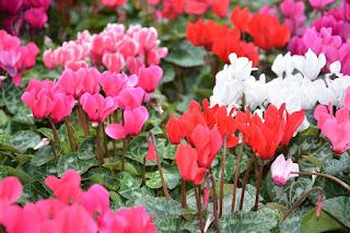 Plantas que florescem no inverno