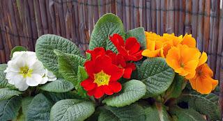 باقة من أجمل الزهور والورود الملونة Photos%2Bflowers%2Band%2Broses01