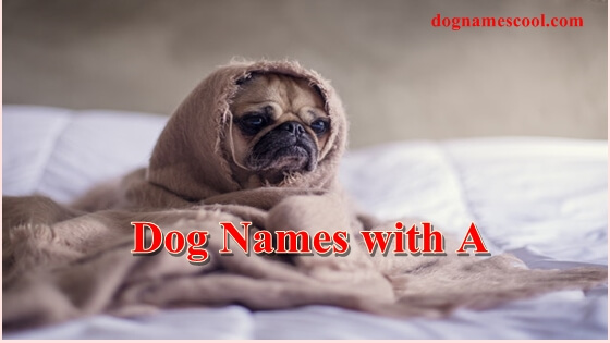 dog names with a