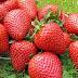 Strawberry Benefits aur Bimariyon Ka Ilaj