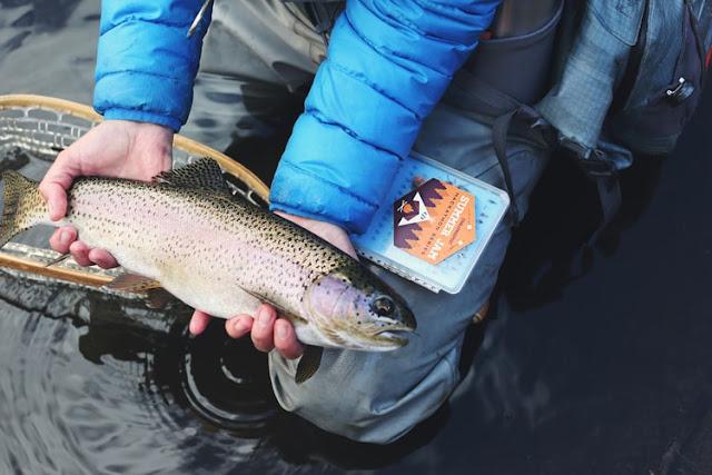 62 Wonderful Fishing Blog Names