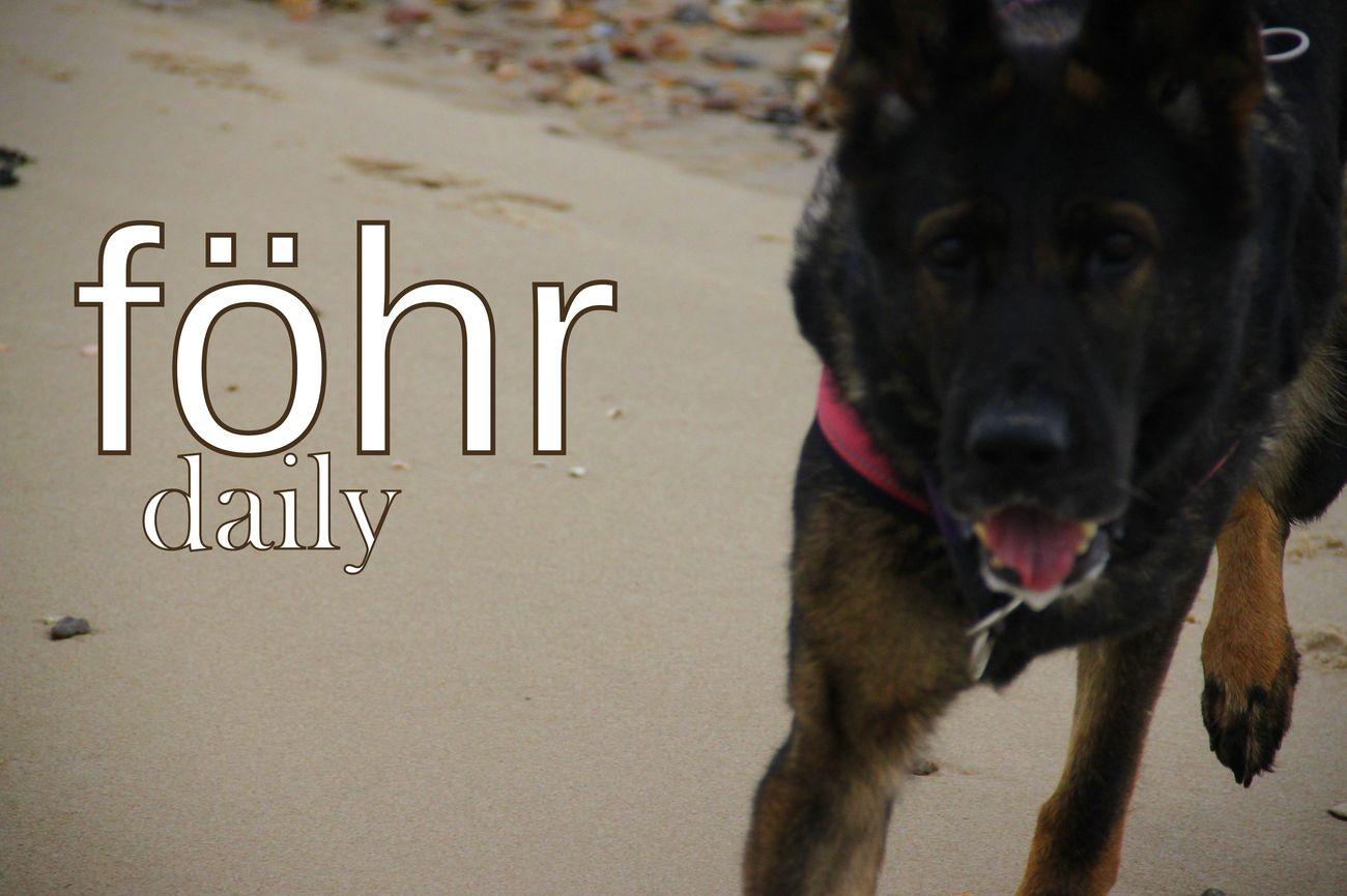 Fohr Beachlife Fur Mensch Und Hund