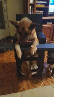 cadeira beiley