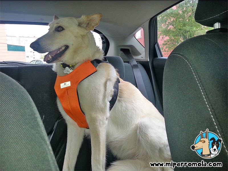 Can de Palleiro en un coche