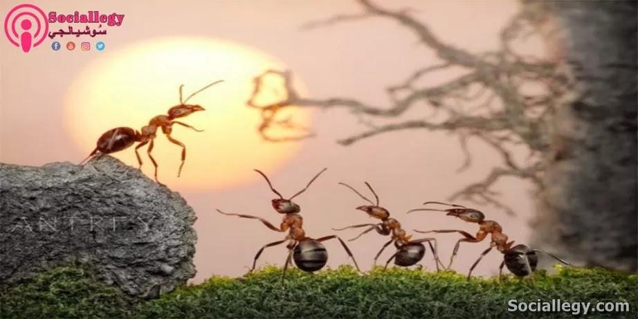 عالم النمل