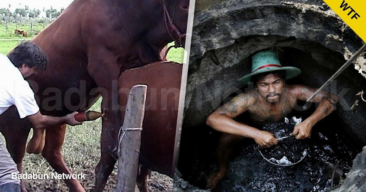 trabajo asco asqueroso inimaginable empleo desempleo animales