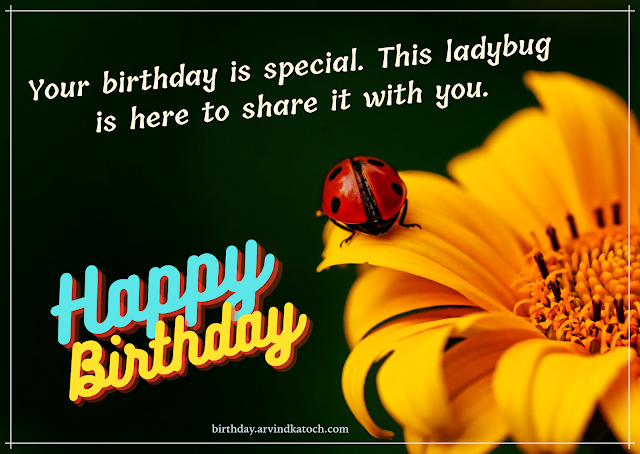 Ladybug, Yellow flower, Birthday Card,