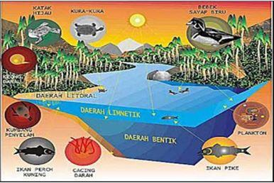 Gambar Zona di ekosistem air tawar, Sumber: ekosistem-ekologi.blogspot.com