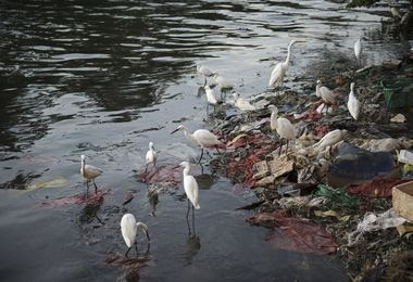 Plastic, industrial waste and oil spill are direct sources of water pollution