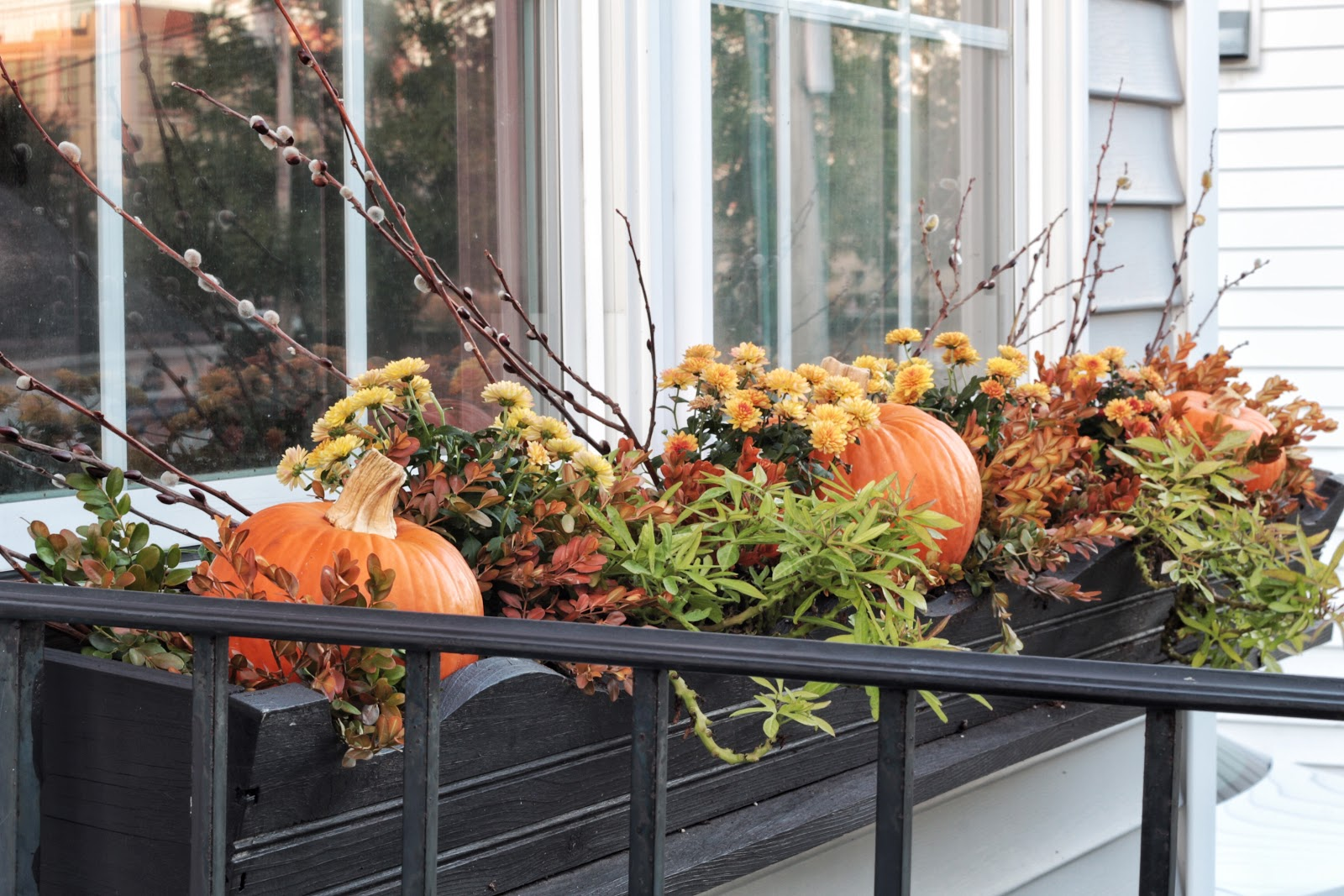 Fill fall window boxes for less