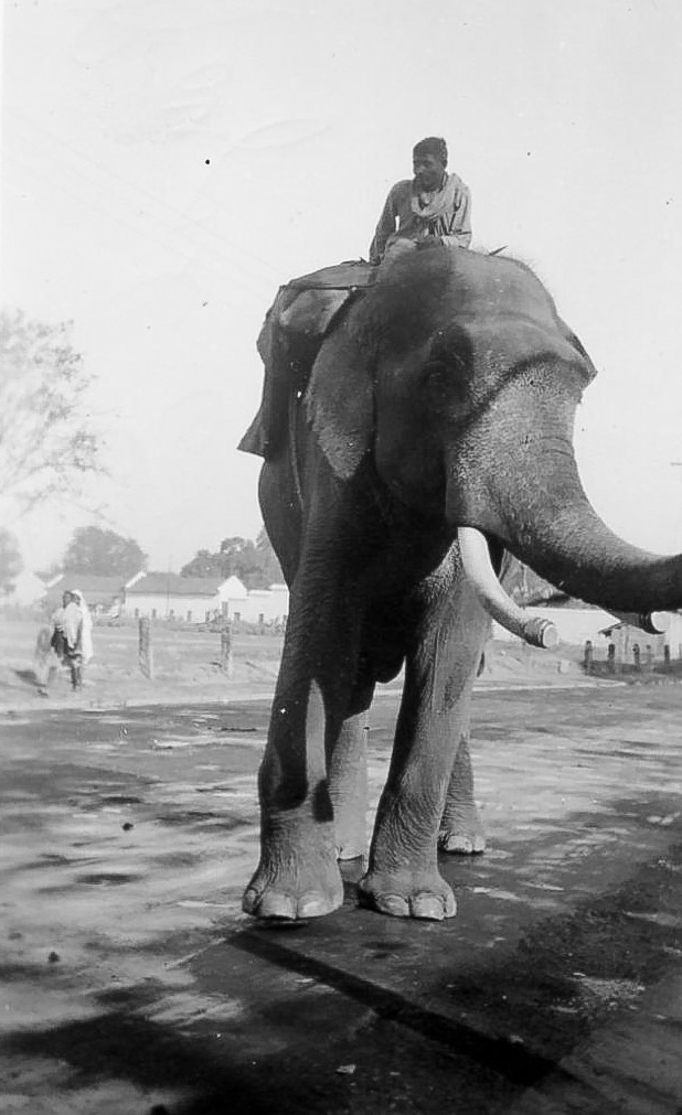 A Royal Elephant and his Keeper - India 1939