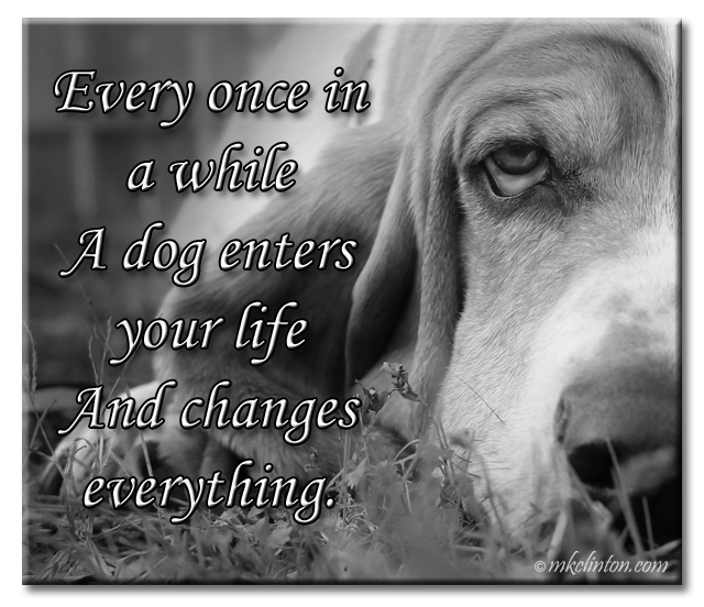 """Every once in a while a dog enters your life and changes everything."" with Bentley Basset Hound"
