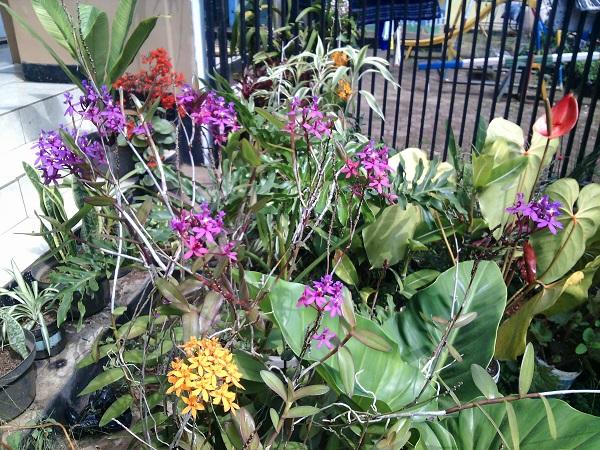 Download 6000 Gambar Bunga Anggrek Merpati Gratis Gambar Bunga