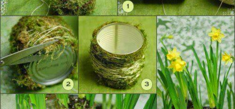 [DIY] How To Make Moss Plant Vase