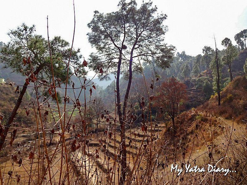 Village trekking in Dhanachuli UttarakhandVillage trekking in Dhanachuli Uttarakhand