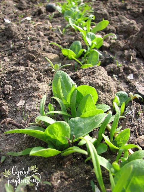 Azotany i azotyny - jak prawidłowo uprawiać warzywa