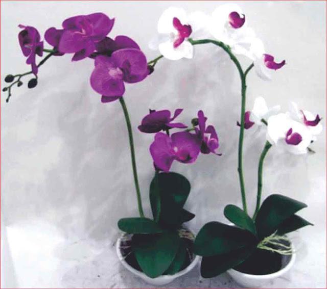 gambar-bunga-anggrek