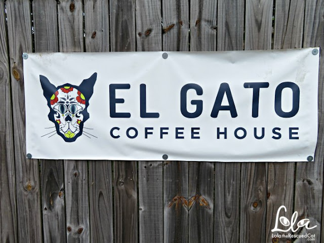 el gato coffee house|cat cafe|lola on the road