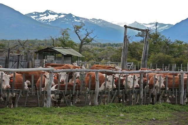 FULANI CRISIS : FG to establish both ranches and grazing reserves