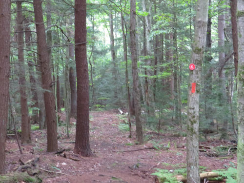trail in McCarthy Hill State Forest