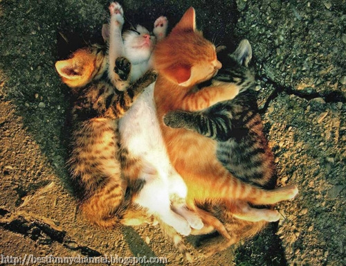 Four sleeping kitten