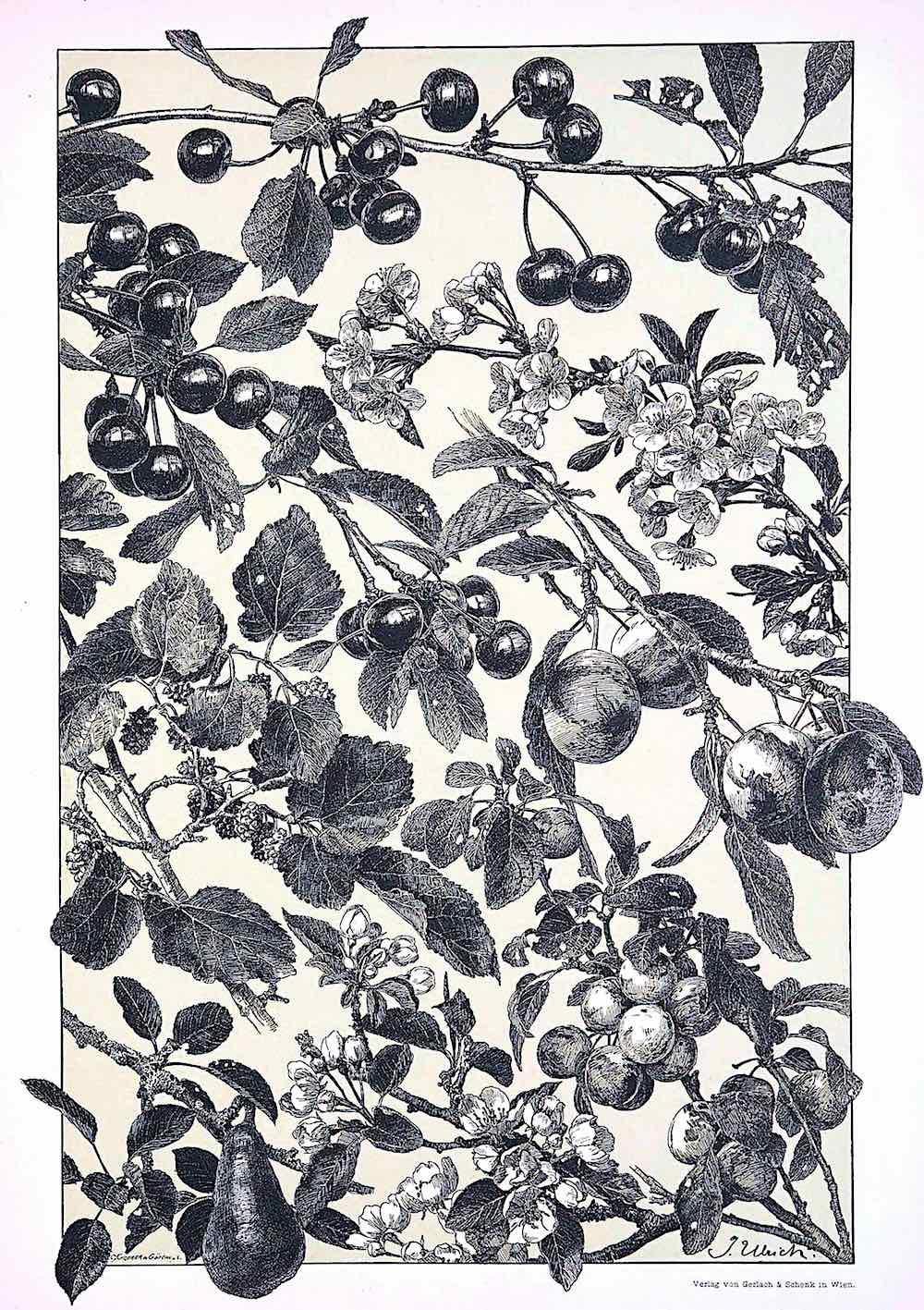 German Ornament 1886 tree fruits