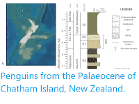 https://sciencythoughts.blogspot.com/2020/03/penguins-from-palaeocene-of-chatham.html