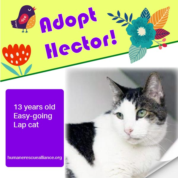 Adopt Hector from Humane Rescue Alliance, Washington, DC!