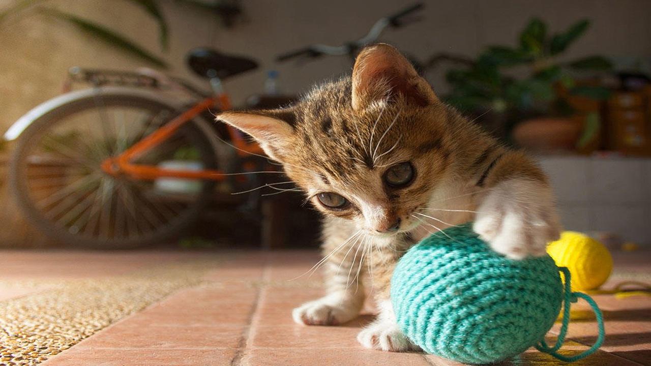 À quoi s'attendre lorsque l'on ramène un chaton à la maison